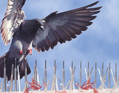 Plastik Kuşkonmaz Bariyer ve Kuş Kovucu Diken Sistemler