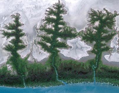 TREE RIVERS