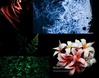 Photography wordpress website