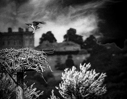 Black and white wildlife