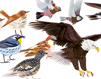 5280 Magazine: Bird Illustrations