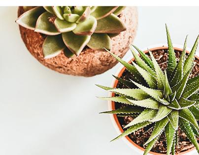 Top 10 indoor plants (landing page)