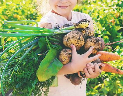 Organic Homemade Vegetables