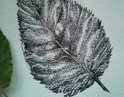 Pen and Ink Sketches- June 2015