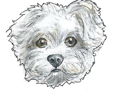 Ilustraciones Mascotas