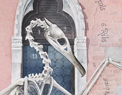 Bones ~ Сormorant [Phalacrocorax Carbo]