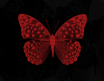 ButterFly effect free photoshop brushes