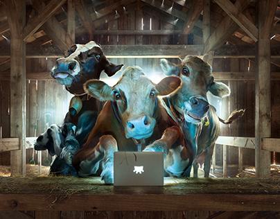 Cow Milking Machines