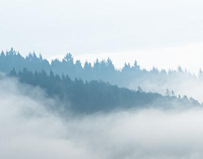 Blackforest - Germany