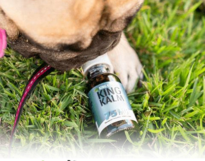 CBD for Pets | CBD for Dogs and Cats