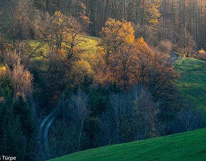 Autumn Walk (Herbstspaziergang)