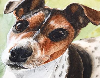 Pet commission — Dogs