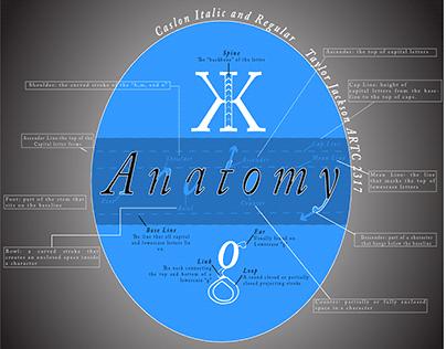 Type Anatomy Poster