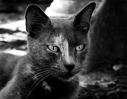 cats - digital photography