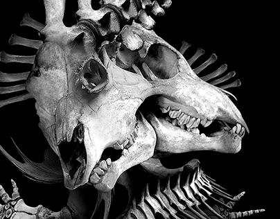 DANSE MORT & VEUVES JOYEUSES