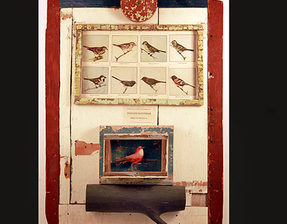 The History of Birds