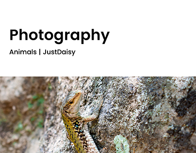 Photography   Animals   JustDaisy