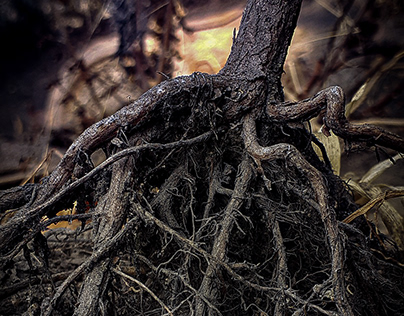 It is the roots that give a tree strength...