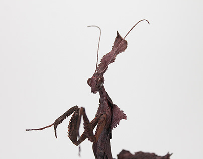 Crepe Paper Ghost Mantis II
