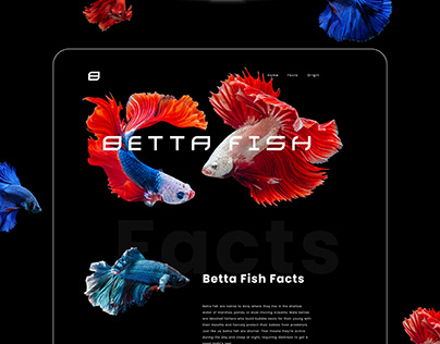 Betta Fish Website - UI/UX