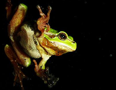 Photographie : Un soir, une grenouille...