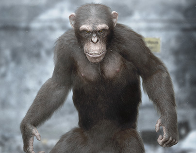 3D Chimpanzee - Making of