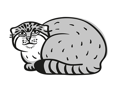 Pallas cats for Academy of Moscow ZOO