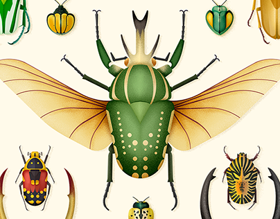 Coleoptera · Beetle illustrations