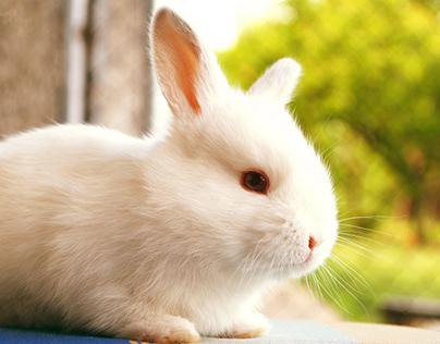 Mơ thấy con thỏ là điềm báo gì?