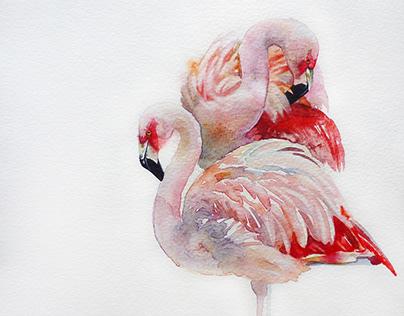 "Watercolor. ""Flamingo family""."