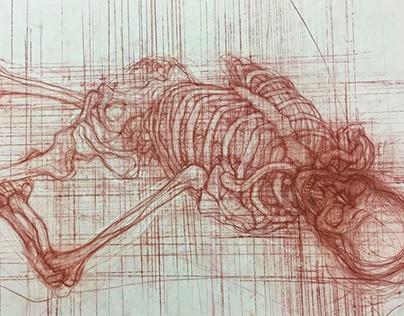 EFS Triennial Skeleton Line Drawing
