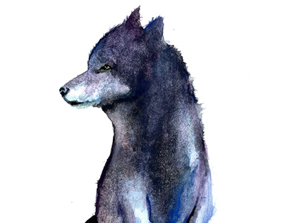 Watercolour Wolf