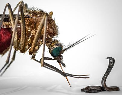Campaña Bayer Antimosquito