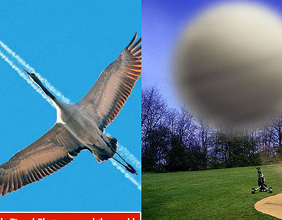 50 Best Perfectly Timed Photos around the world for you