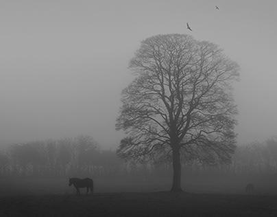 Melancholy misty morn