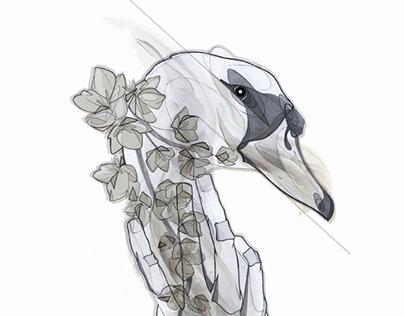 """Versalles"" Ilustraciones para Sebastian Melmoth."