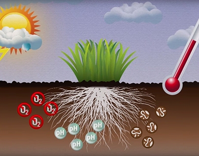 Soil System Infographic