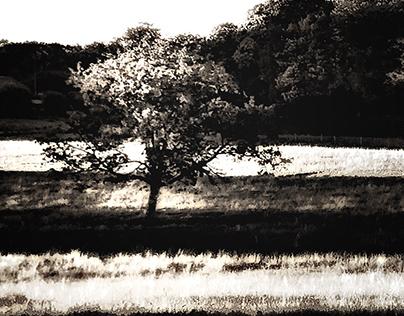 Between the lines - - Blackography VIII