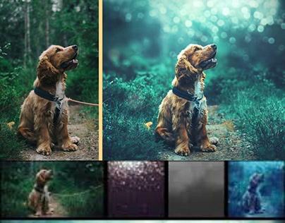 Wildlife retouching - Wildlife photography editing