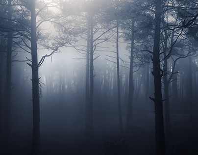 Atmospheric Woodland & Trees