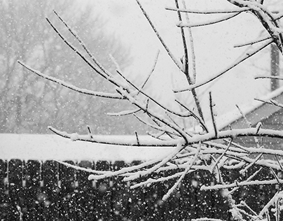 Back Yard Snow Branches