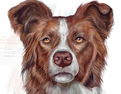 Dog portraits Vol3
