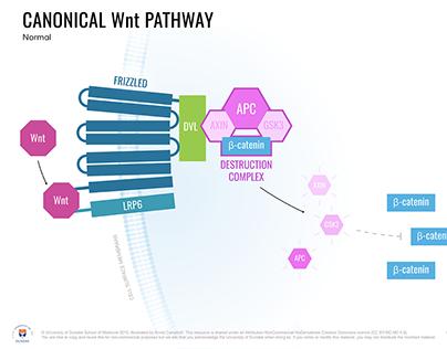 Medical Illustration - Cellular Signalling in Cancer