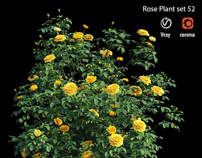 Rose plant set 52