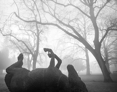 Foggy morning in the park.