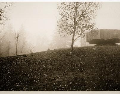 The Foggy Nature Scene