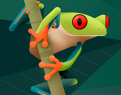 Hylidae - Tree frog illustrations