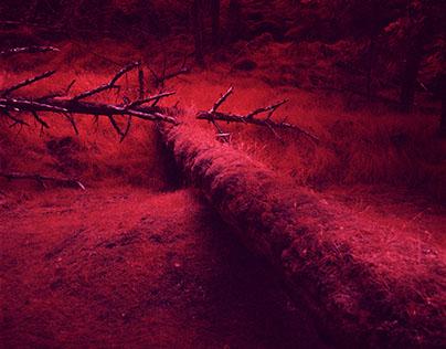 Haida Gwaii Infrared
