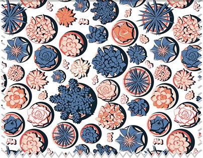 Succulent patterns