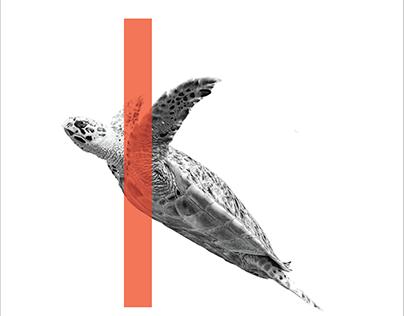 Sea Turtle Design